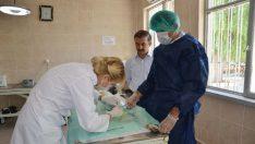 Malatya'da Hayvan Kısırlaştırma Merkezi ve Geçici Bakımevi çalışmaları…