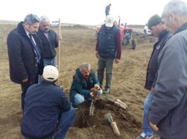 Malatya'ya uyum sağlayan kinoa bitkisi için parseller kuruldu