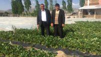 Çilek üretim alanlarını gezen CHP Milletvekili Gürer'den Tarım Bakanlığına çağrı: Aile tipi işletmelere yönelin.