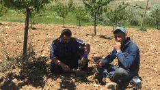 Malatya Akçadağ'da çiftçiler icraya verildi