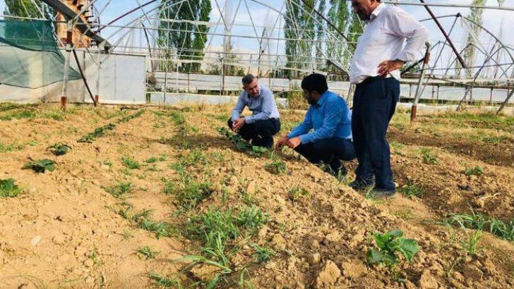 Çınar : 'Yeşil Gıda Seracılık' alanımızda meyve, sebze ve süs bitkisi ürünlerini yetiştirmeye başladık.
