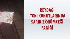 Malatya Beydağı Toki Mahallesinde Sarıkız örümcegi paniği