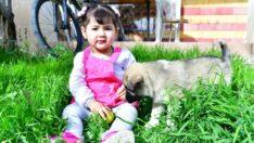 Yeşilyurt Belediye Başkanı Mehmet Çınar, kızı Nisa Akın için köpek talebinde bulunan baba Murat Akın'ın isteğini yerine getirdi
