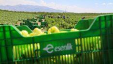 Esenlik A.Ş. Genel Müdürü Ata Ünlü, Battalgazi ilçesi Çolakoğlu Mahallesinde salatalık ve biber üreticilerini ziyaret etti.